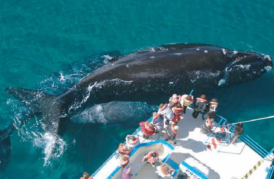 Resultado de imagen para avistaje ballenas peninsula valdes mejor sudamerica