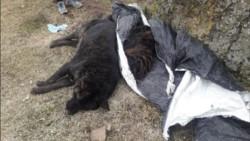 Río Turbio declaró la Emergencia y presentó denuncia penal por masiva matanza de perros.
