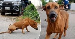 Gae engaña a todos con el truco del perro invalido para sacarle comida a la gente.