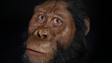 Las reconstrucciones faciales realizadas a partir de las características fósiles muestran a un homínido con pómulos y mandíbula prominentes.