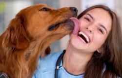 Marie fue contagiada de Capnocytophaga, un virus común en la saliva de perros y gatos. (Imagen ilustrativa)