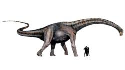 Notocolossus es uno de los dinosaurios mas grandes del mundo y fue hallado por el equipo del Laboratorio y Museo de Dinosaurios en Mendoza. Ilustración: B. González Riga.
