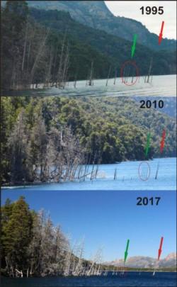 El seguimiento de los geólogos, año por año y como los árboles se fueron hundiendo.