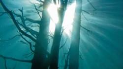 El bosque sumergido escondería un secreto catastrófico.