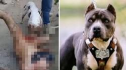 El hombre de unos 30 años (en la foto de arriba muy censurado) fue atacado después de presuntamente violar a una mujer .