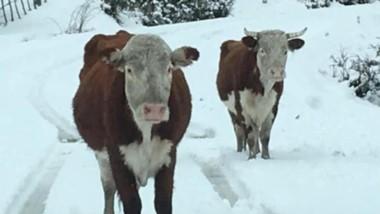 Blanco. Eduardo Pérez confirmó los parajes donde se acumularon alrededor de 10 centímetros de nieve.