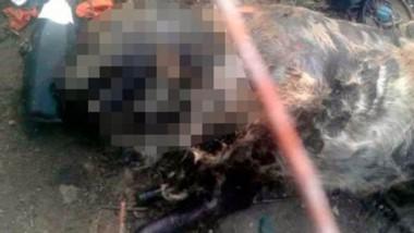 El cruel hecho ocurrió en el barrio Pietrobelli de la ciudad petrolera.