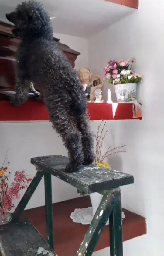 Benito pide que lo suban sobre el cajón de Joha.