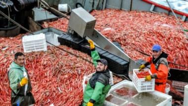 Se espera que en los próximos días se lleven adelante las tareas de prospección para luego comenzar oficialmente la temporada provincial de pesca de langostino.