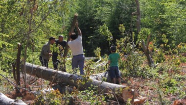 La planificación, el bosque y la tierra. En Lago Puelo, un problema que se extiende en el tiempo.