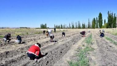 Para el verano y primavera de 2021, se prevé repartir la cosecha entre comedores y familias vulnerables.