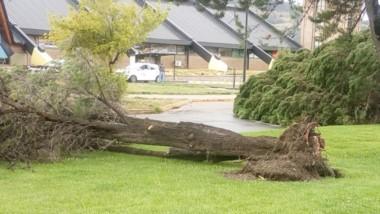 Por el fuerte viento,  árboles de gran porte cayeron en la avenida Alvear, frente a la terminal de ómnibus.