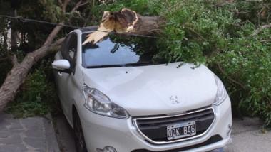 Un auto con destrozos tras la caida de un árbol en barrio alberdi