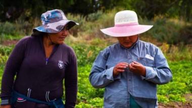 Labor. El informe centra su atención en la vida y trabajo de los migrantes de origen boliviano