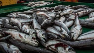 Las cámaras empresarias de Comodoro Rivadavia expresaron su preocupación por el mercado de la merluza.