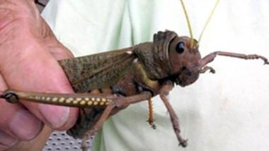 fin de ciclo. Los insectos morirán después de poner sus huevos .