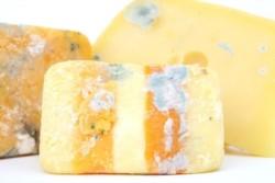 Un queso vencido inició el problema (imagen ilustrativa)