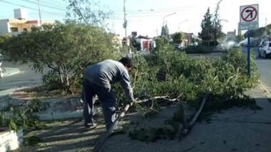 Labores. Una de las tantas postales de las labores en la capital para reparar los daños que generó el intenso viento del fin de semana.