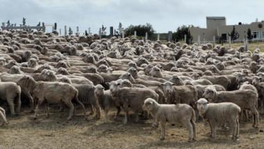Con los cambios en retenciones, se favoreció la exportación con lana procesada desde Chubut.