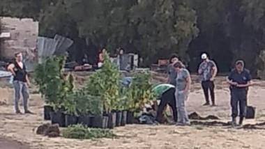 Las plantas de marihuana fueron incautadas por el personal policial.