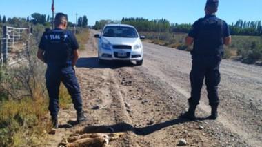 Efectivos policiales secuestraron siete liebres cazadas en Byn Gwyn.
