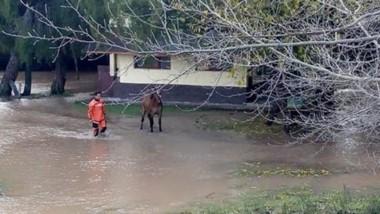 Debieron retirar a los caballos de los sectores de riesgo.