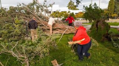 Algunas de las intervenciones se debieron a la caída de árboles.