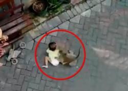 Un mono llegó, a bordo de un pequeño scooter, y se arrojó sobre uno de los tres niños que jugaban con su madre.