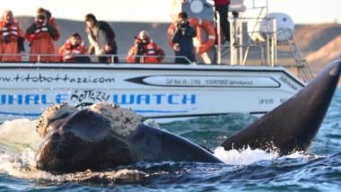 Los avistajes e ballenas se enmarcan en las actividades consideradas dentro del ecoturismo.