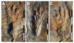 Las huellas del nuevo cocodrilo bípedo marcadas en la roca datan de 100 millones de años atrás.