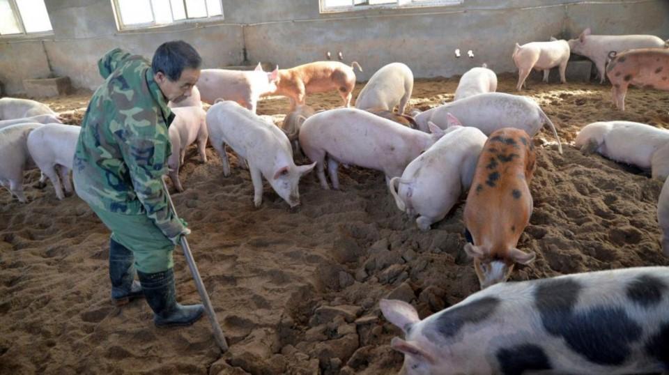 Científicos alertan sobre aparición de nueva gripe porcina, G4-EA-H1N1