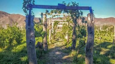 El río Chubut riega las viñas en Paso del Sapo. Veranos frescos y otoños secos favorecen los vinos regionales.