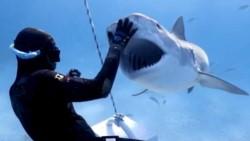 La víctima fue un hombre de 36 años, que se encontraba pescando con arpón en las aguas de la popular Isla Fraser cuando el escualo lo atacó y le mordió una pierna. (Archivo)