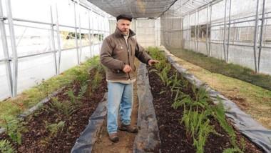 Bajo cubierta. Los plantines crecen bajo la mirada experta de Oscar Lebed.