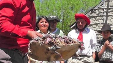 El flagelo de las tucuras afectó a varios pueblos del interior.