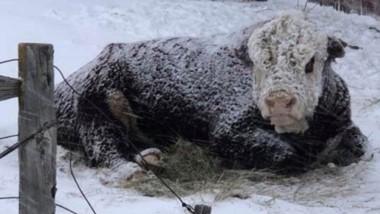 Escenario crítico. Tras la nevada más fuerte de los últimos 20 años, esperan el balance final de las pérdidas.