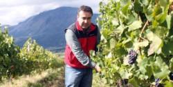 La actividad vitivinícola se viene desarrollando hace ya algunos años en Chubut con mucho éxito.