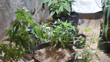 El invernáculo de marihuana con sistema eléctrico fue secuestrado