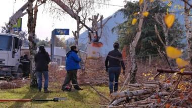 Trabajos de poda para prevenir los cortes de energía en la Cordillera.