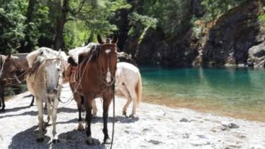 Pura naturaleza. Las excursiones de aventura esperan en la Comarca Andina.