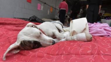 Sobreviviente. Uno de los perros que encontró manos solidarias de parte de vecinos y organizaciones que no se olvidaron de los animales, víctimas del incendio devastador.