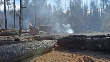 Humo. Una de las tantas postales de bosques milenarios incendiados en los últimos días.