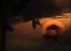En el video que se volvió viral, se puede apreciar una figura que sale de unos yuyos caminando en cuatro patas mientras un perro le ladra.
