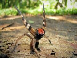 De inmediato, el joven buscó un recipiente para atrapar a la araña