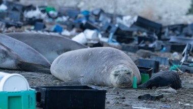 Los elefantes y la basura. Así luce la costa de la Península Valdés.