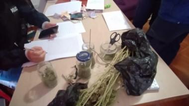 Las diligencias derivaron en el secuestro de cogollos de cannabis y de plantas en crecimiento.