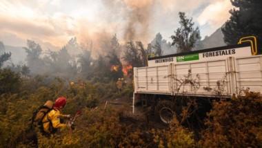 Los incendios ocurridos en el pasado verano dejaron un legado que es analizado por especialistas.