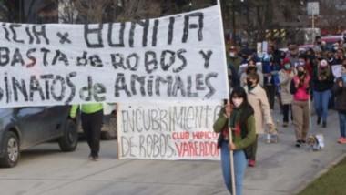 """Maltrato animal. La comunidad volvió a reclamar justicia por la yegua """"Bonita"""" y terminar con el abigeato."""