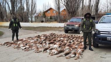 Efectivos de Gendarmería incautaron los 120 cueros de liebre.