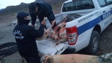 Se incautaron los animales encerrados en el corral, los faenados, sus cueros y los cuchillos y sierras.